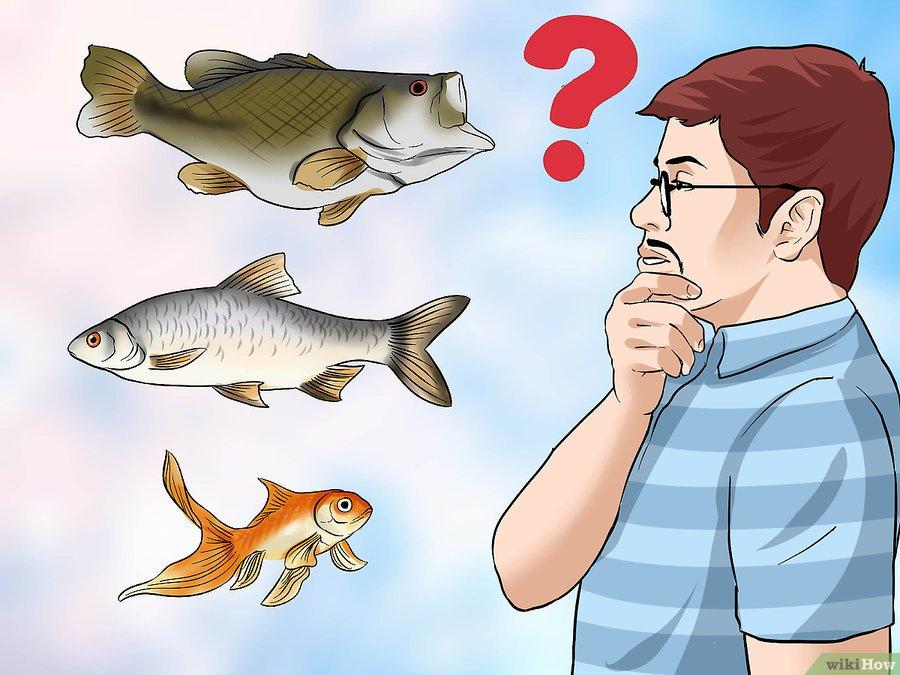 Como empezar un criadero de peces vanguardia acuaristica for Como hacer un criadero de peces